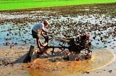 Chuyển đổi cơ cấu cây trồng trên đất lúa vùng ĐBSCL