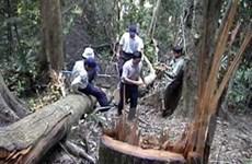 LHQ công bố 4,38 triệu USD giúp VN bảo vệ rừng