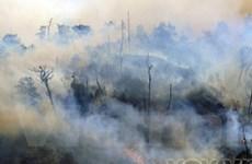 Lào Cai: Cháy trên 200ha rừng tại huyện Sa Pa
