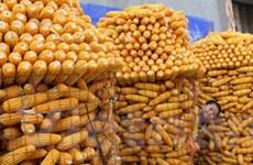 Giá cả của nhiều mặt hàng nông sản đồng loạt giảm