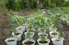 Nga tạo ra giống cây trồng giúp cải tạo đất nhiễm độc