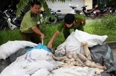 Hà Nội phát hiện gần 1 tấn động vật ôi thiu