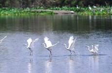 Đảo Cò - Bức tranh thiên nhiên tuyệt đẹp