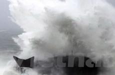 Hàng nghìn người sơ tán do bão tại Nhật Bản