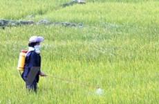 Siết chặt quản lý việc sử dụng đất trồng lúa