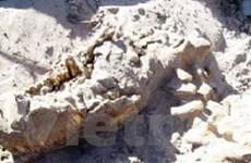 Dấu vết khủng long lớn và cổ nhất tại Australia
