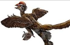 Bằng chứng mới xác nhận nguồn gốc loài chim