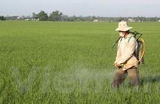 Nghiên cứu tạo giống lúa CL-8 chất lượng cao