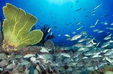 LHQ thông qua hai nghị quyết về bảo vệ đại dương