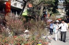 Chợ hoa, cây cảnh nhộn nhịp ngày giáp Tết