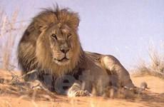 Kenya sẽ không còn các loài ác thú vào năm 2060?