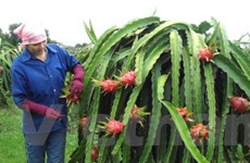 58 tỷ đồng hỗ trợ nông nghiệp, nông thôn Tiền Giang