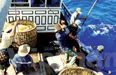 Nghề câu cá ngừ đại dương thu lãi lớn đầu năm