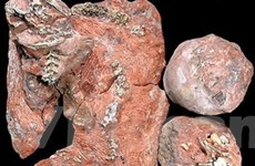 Một cá nhân sở hữu trên 300 mẫu hóa thạch cổ