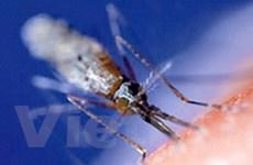 Bước đột phá mới trong việc điều trị bệnh sốt rét