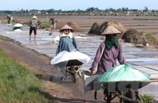 Nghệ An, Bạc Liêu triển khai thu mua muối tồn đọng
