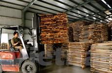 Nhà máy chế biến gỗ ván ép đầu tiên tại Bắc Kạn