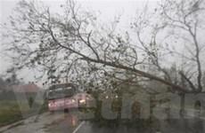 Siêu bão Megi đã mạnh lên khi tiến về Trung Quốc