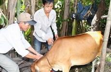 Hỗ trợ 4 địa phương vắcxin phòng bệnh gia súc