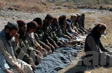 Hơn 110 tay súng Taliban tại Afghanistan ra đầu thú