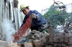 Khuyến cáo phòng nhiễm virus Hanta từ chuột cống