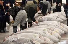 Chợ cá nổi tiếng Tokyo lại mở cửa đón du khách