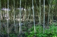 Công bố Khu dự trữ sinh quyển thế giới Kiên Giang