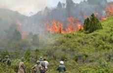 Chưa khống chế được đám cháy rừng tại Nghệ An