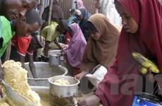 22 nước rơi vào khủng hoảng lương thực kéo dài