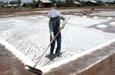 Diêm dân Phú Yên lao đao do muối tồn đọng lớn