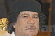 """""""Sóng biểu tình"""" châu Phi bắt đầu lan sang Libya"""