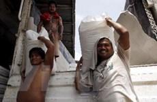 Gạo thế giới trên đà tăng giá và cơ hội của Việt Nam