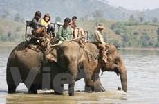 Đắk Lắk: Độc đáo tour du lịch voi ở buôn Jun