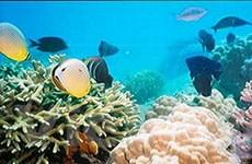 Bảo vệ khẩn cấp các đại dương và hệ sinh thái biển