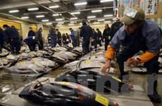 Bán đấu giá một con cá ngừ giá hơn 700.000 USD