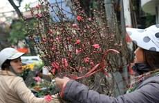 Thủ đô Hà Nội rực rỡ với muôn ngàn loài hoa xuân