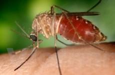 Số ca tử vong do virus Tây sông Nile ở Mỹ tăng cao