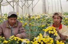 Rau và hoa của Đà Lạt tăng giá mạnh do ngập úng