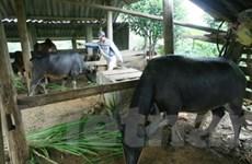 Hỗ trợ sản xuất các hộ tái định cư Thủy điện Sơn La