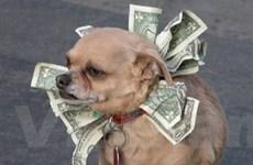 Italy: Di chúc để lại 2 triệu euro cho chú cún yêu