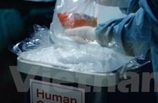 Các bệnh viện châu Âu chống buôn bán nội tạng