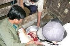 Vào mùa cắt nhung hươu ở xã vùng cao Ninh Bình