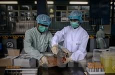 Nhật Bản áp dụng luật phòng chống dạng cúm mới