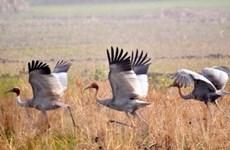 Biến đổi đa dạng sinh học Vườn Quốc gia Tràm Chim