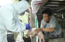 Đắk Lắk đã khống chế thành công dịch lợn tai xanh