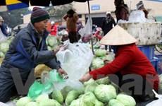 Giá rau xanh ở Đà Lạt tăng đến 30% sau mưa bão