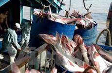 """""""Không có lý do gì về cá tra, basa Việt Nam"""""""