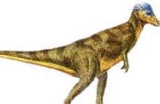 Tìm thấy hóa thạch khủng long khoảng 75 triệu năm