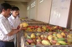 Chứng nhận UTZ toàn cầu cho cacao Bà Rịa-Vũng Tàu