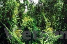 Phát hiện thêm động, thực vật hiếm ở VQG Phú Quốc